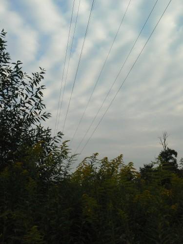 Wires-Foto_b